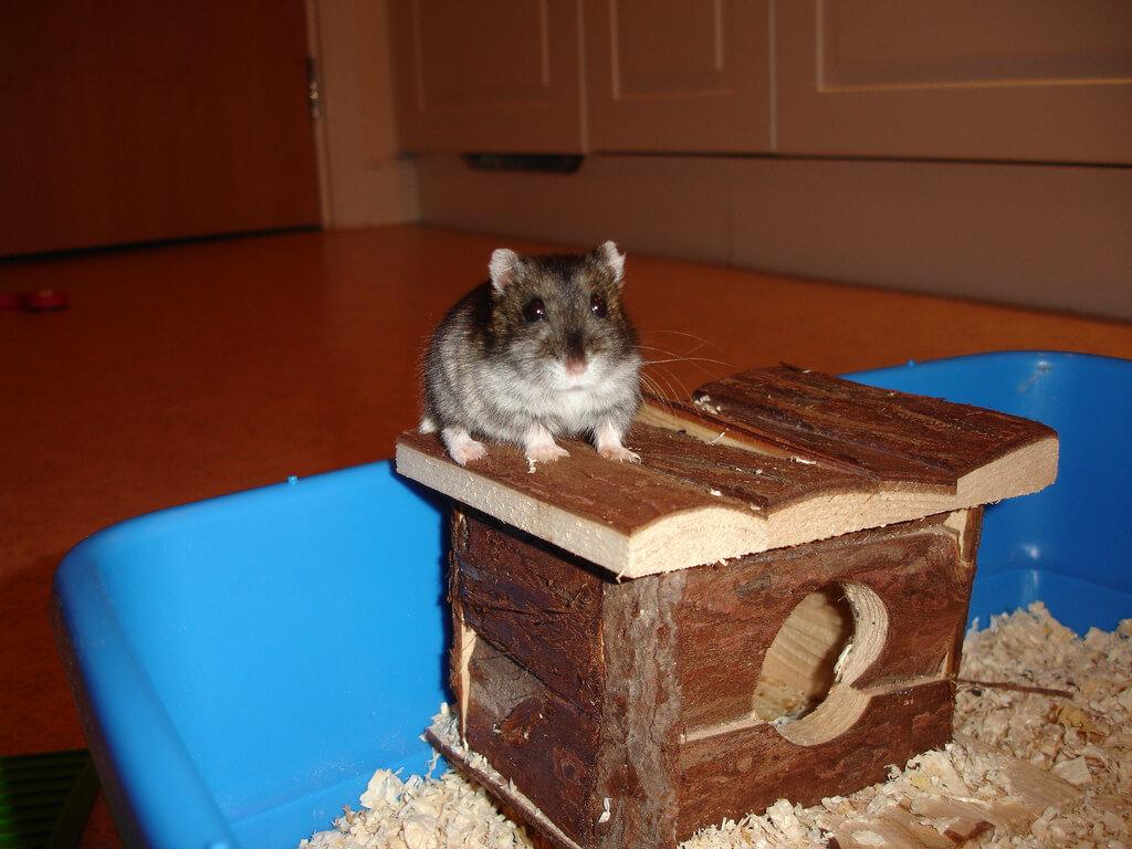 hamster hus
