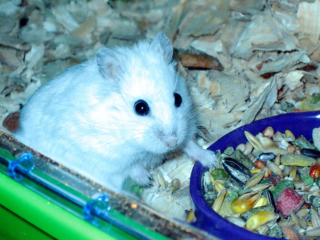 Hamster Accessories an...