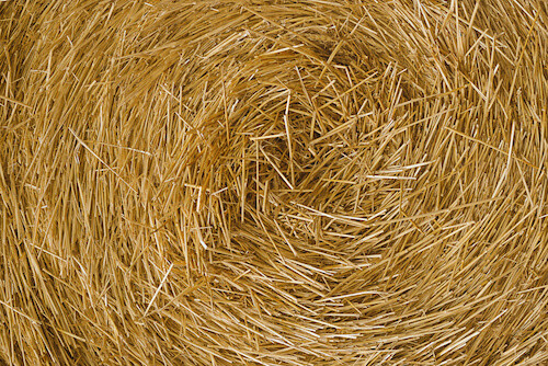 Hay for Hamster Habitat