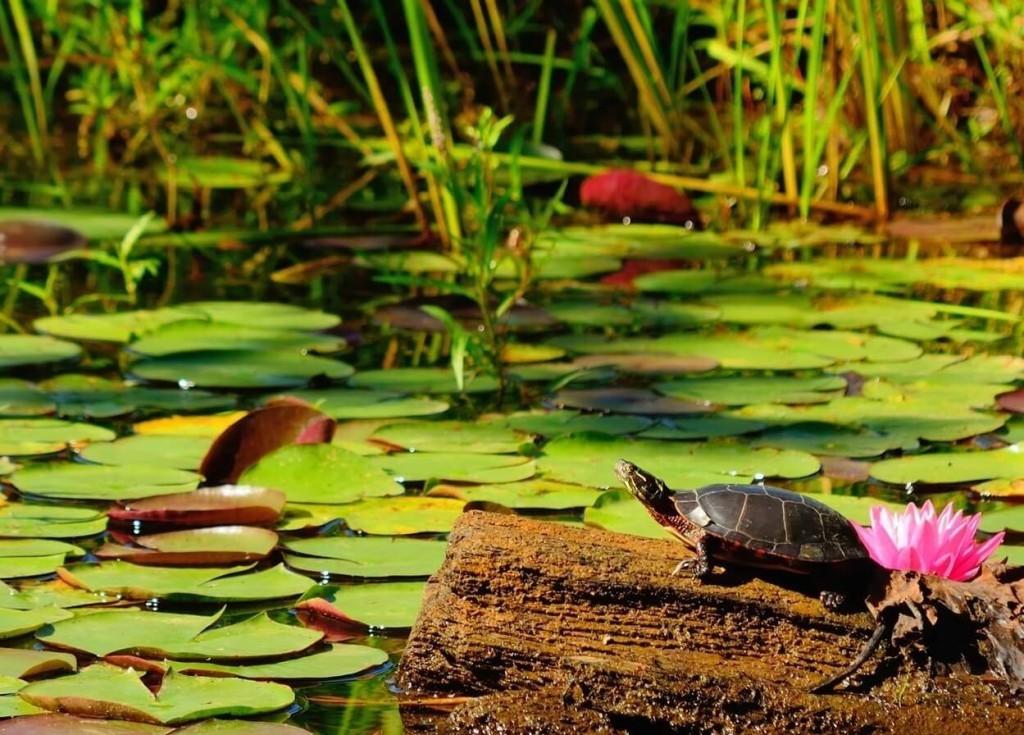 ... turtle pens indoor turtle tables aquatic turtle tanks water turtle