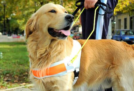 service vs emotional support dog