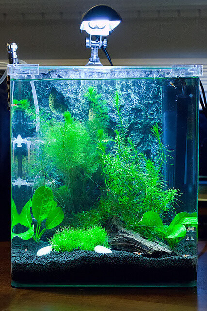 selecting aquatic plants for goldfish