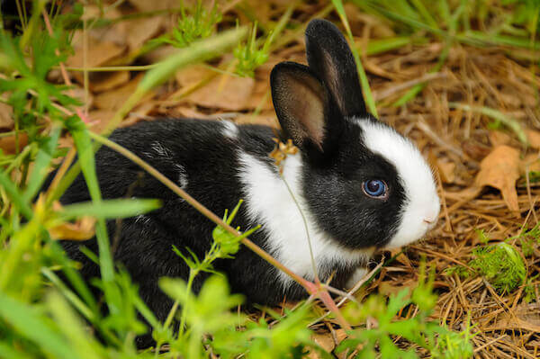 how to take care of a pet rabbit outside