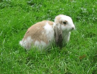 bunny-in-grass