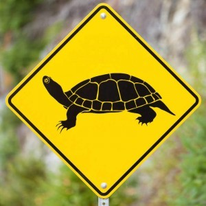 Caution Turtle Crossing