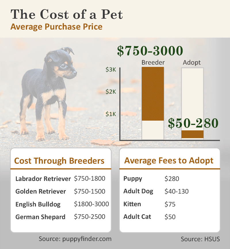 cost of adoption vs breeder