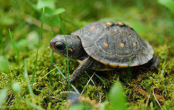 cute-baby-turtle