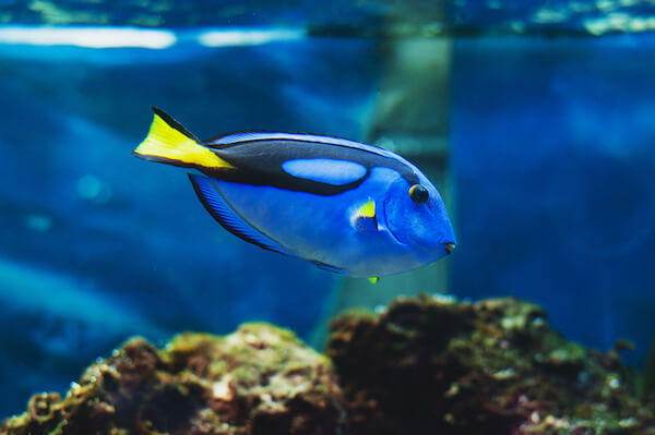 How much work is it to own a saltwater fish tank caring for How much is a fish tank