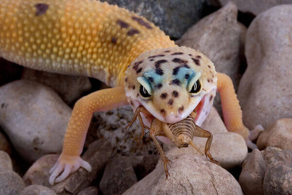 how to take care of a pet lizard caring pets