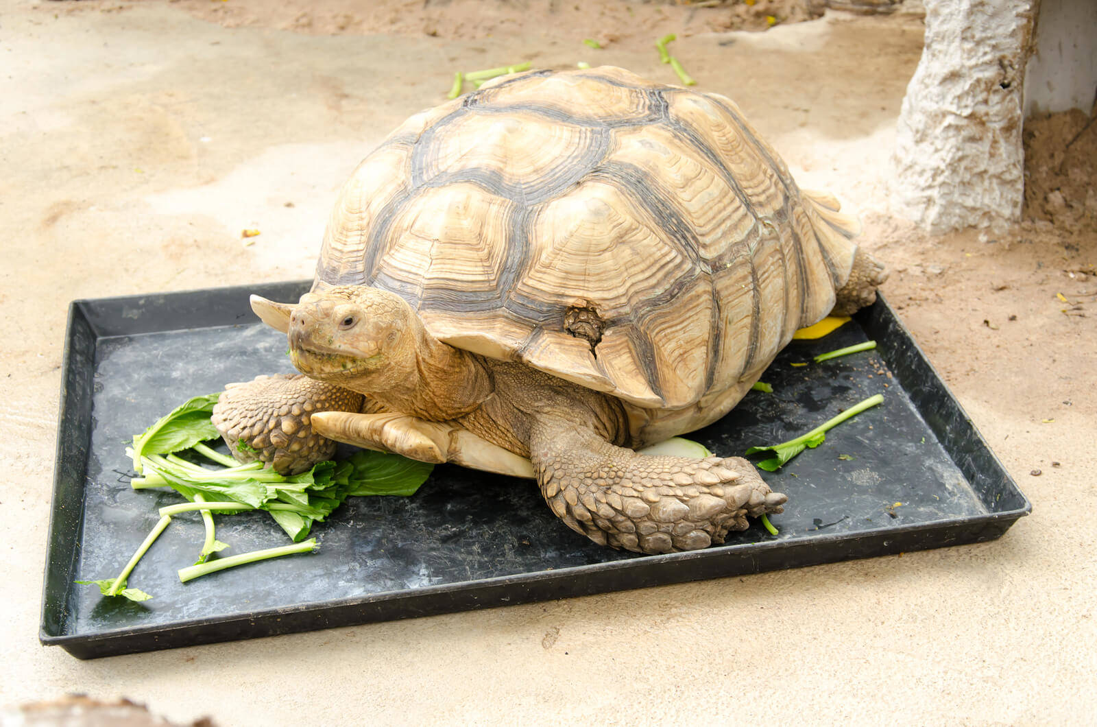 What Tortoises, Aquatic and Box Turtles Eat : Feeding & How