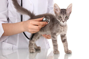Find Vet Care