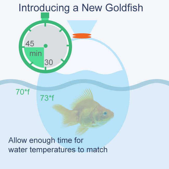 floating goldfish bag