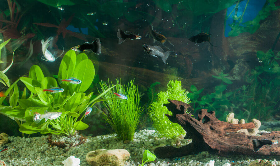 How To Take Care Of A Freshwater Fish Tank Caring Pets
