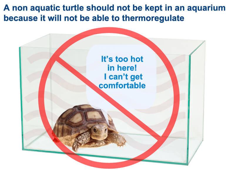 Indoor turtle tables how to take care of a turtle aquariums are not suitable for non aquatic turtles aloadofball Image collections