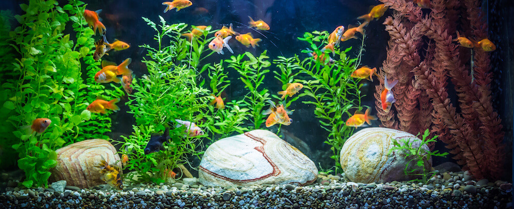 How to take care of a goldfish in an aquarium tank for How to keep fish tank clean without changing water