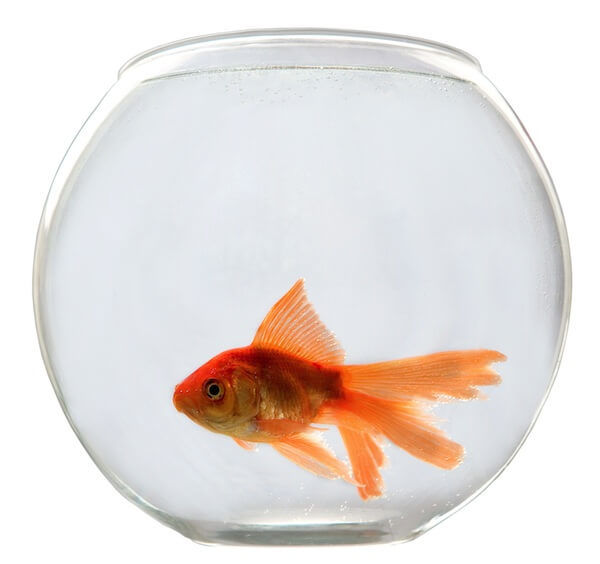 How to take care of a goldfish bowl basics for begginers for How to make a fish bowl