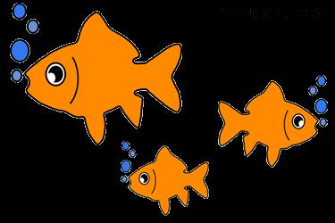goldfish care guide