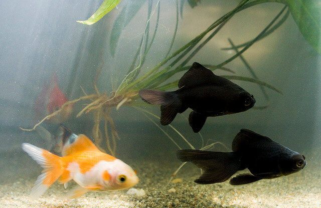 how to take care of fish tank without filter
