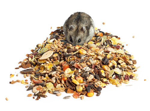 Image result for hamsters diet