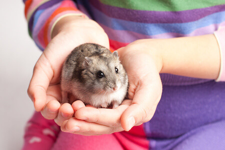 How to Handle, Hold & Tame a New Hamster