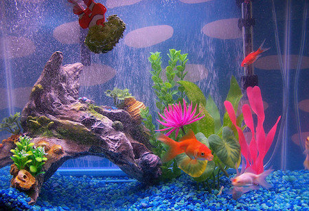 11 factors of goldfish aquarium water quality caring pets for Aquarium decoration for goldfish