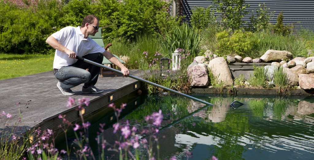 Seasonal Goldfish Pond Care And Maintenance