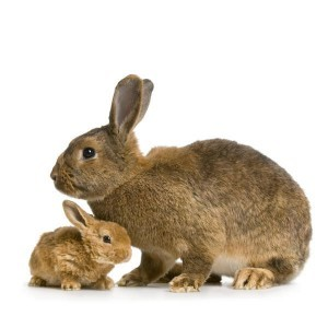 Mother Rabbit and Baby