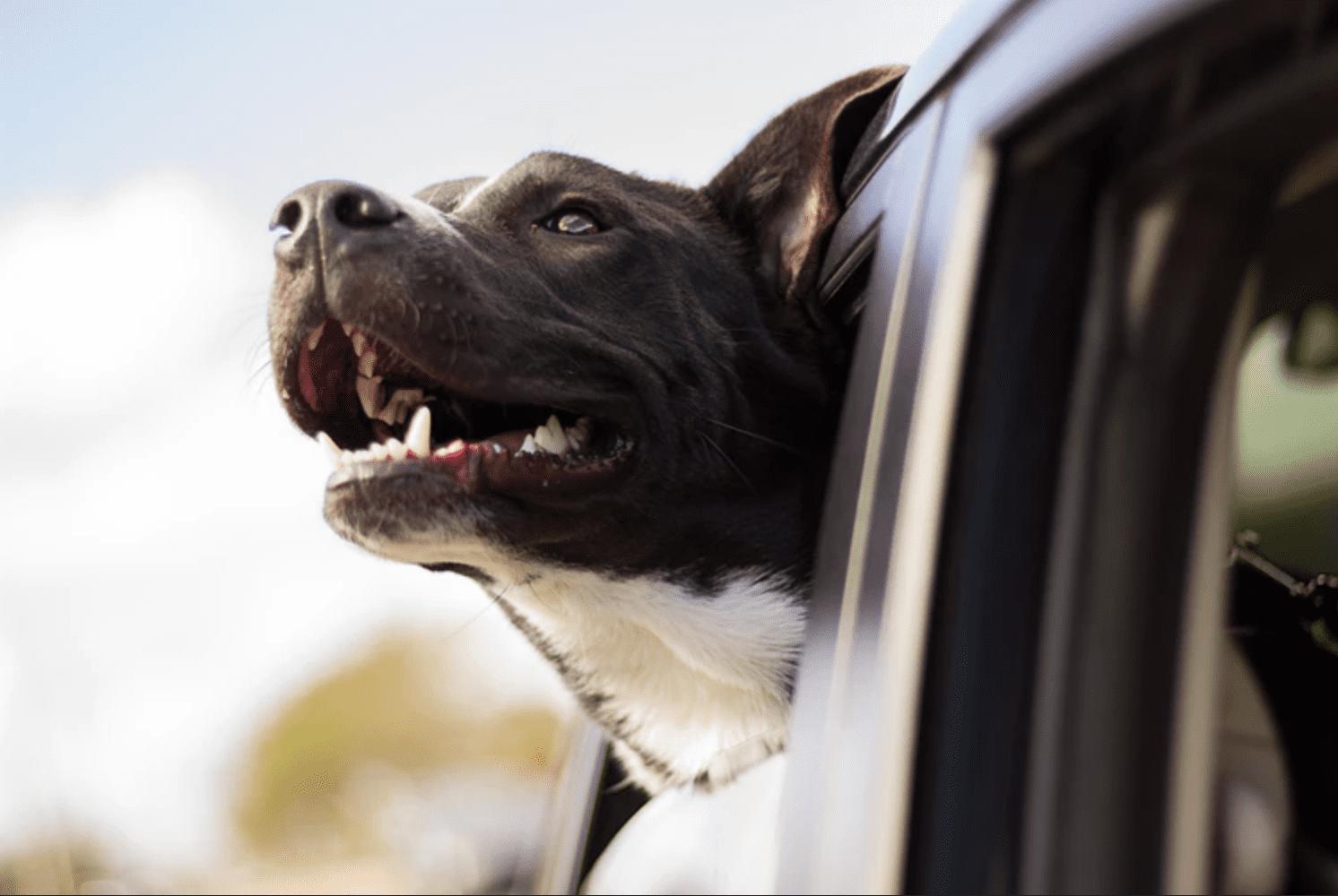 road trip bring dog