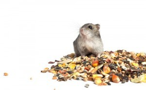 Seeds as Hamster Food