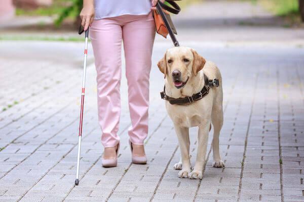 Get Dog Service Certified
