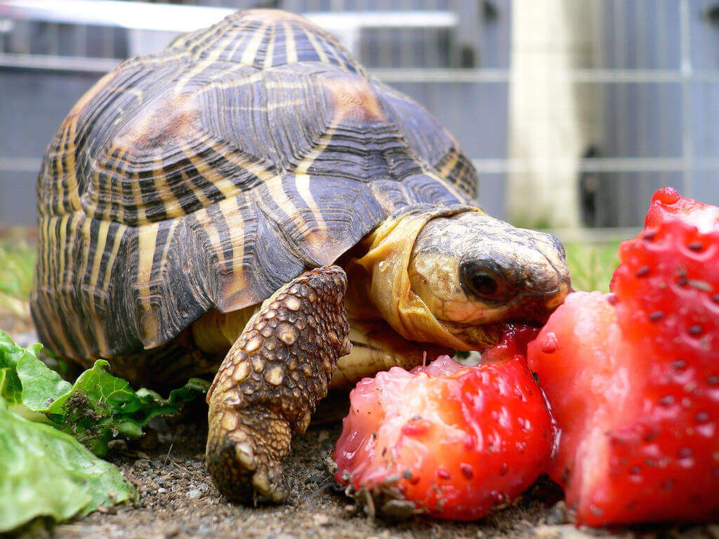 Can Tortoises Eat Dog Food