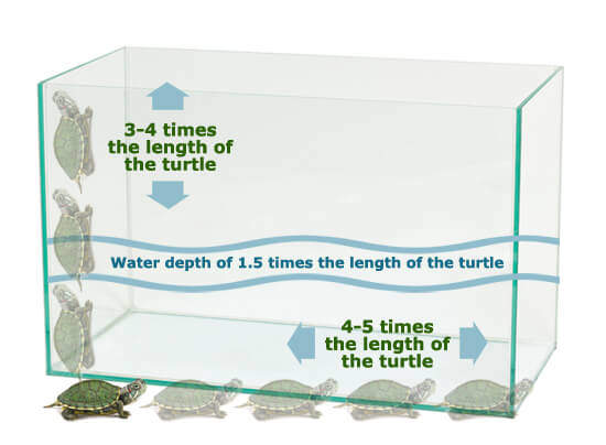 Turtle Aquarium Tank - How to Take Care of a Turtle