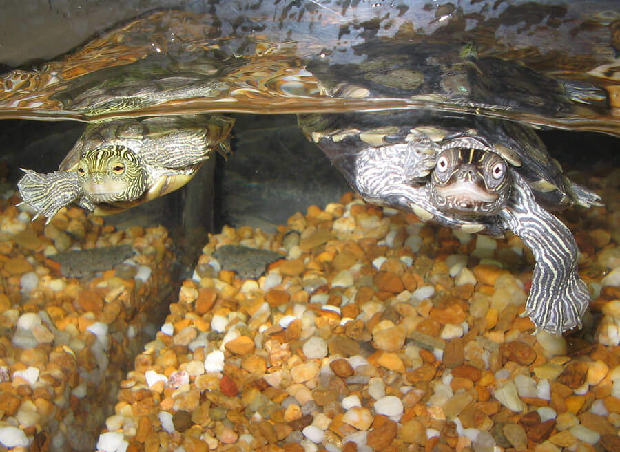 Pics Photos - Aquatic Turtle Aquarium And Pond Accessories